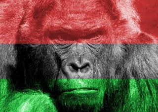 magyar_gorilla