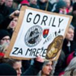 gorilla_mrez
