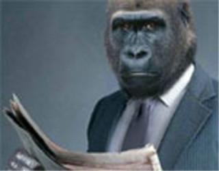 gorilla_125